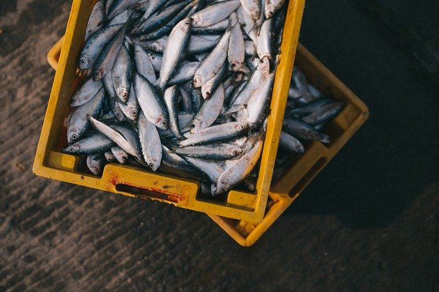 How Safe Is It To Eat Farmed Fish?
