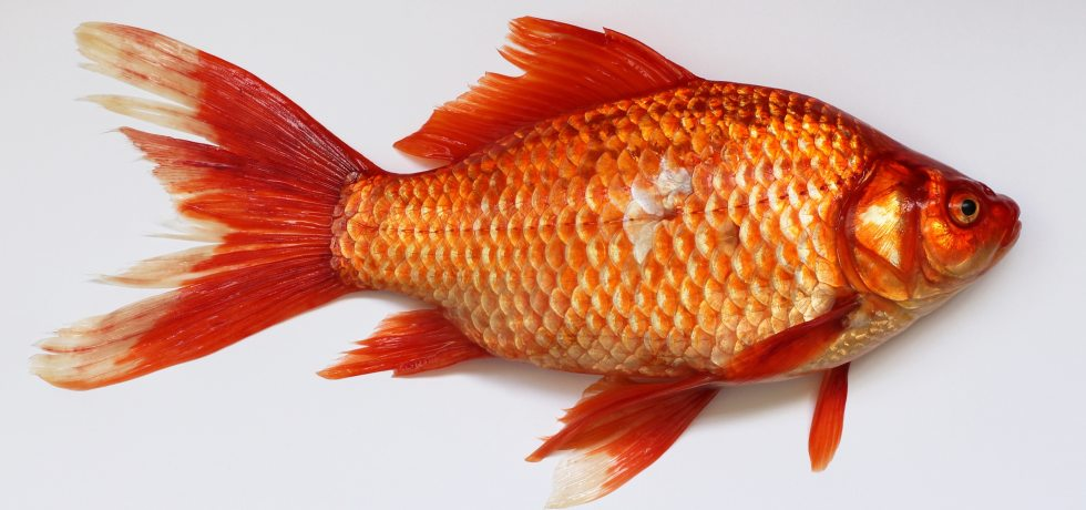 Fish Odour Syndrome Actually Makes You Stink Like A Fish