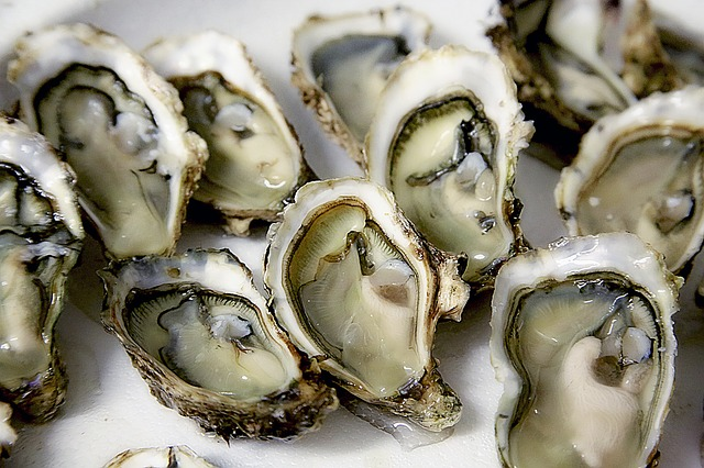 oyster-1522835_640